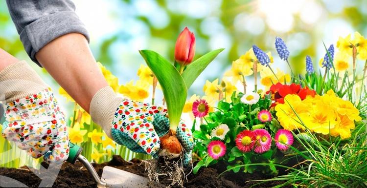 أهم 6 خطوات يجب مراعاتها عند زرع حديقة المنزلك